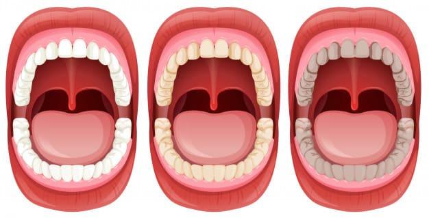 anatomia da boca estrutura bucal